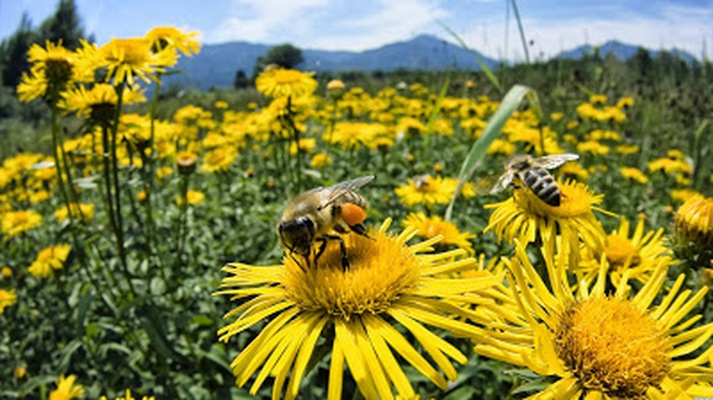 03-abejas-roboticas-salvando-y-ayudando-su-gran-labor-1000xxxx