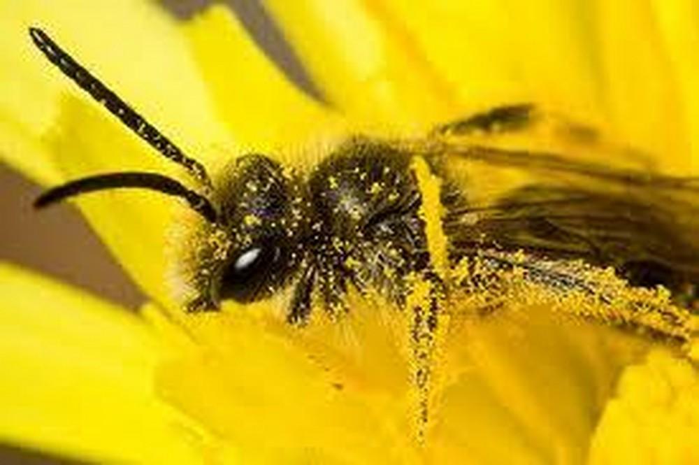 07-abejas-roboticas-salvando-y-ayudando-su-gran-labor-1000xxxx