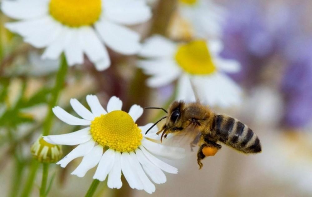 09-abejas-roboticas-salvando-y-ayudando-su-gran-labor-1000xxxx
